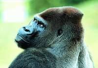 Monkey-Photos