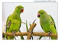 photo-555.com Album 2 Screensaver