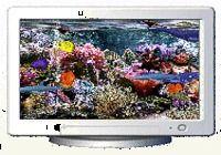 AquaFish 3D