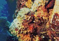 3D Paysage sous-marin