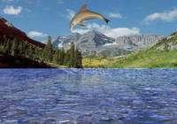 free 3D Dolphin Aqua