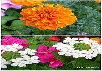 Fonds d'Ecran Fleurs
