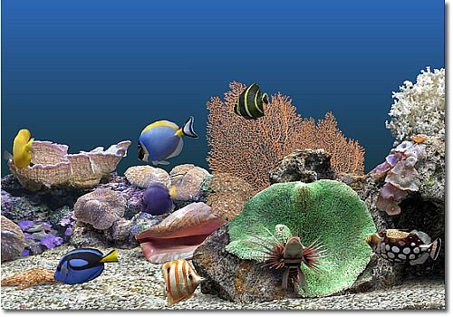 T l charger marine aquarium pour windows freeware for Fond ecran gratuit aquarium