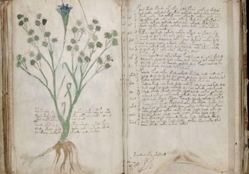manuscrit de voynich pdf