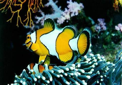 Free Fish Screensaver