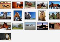 Noble Stallions Screensaver