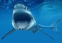 Requins Fond D'écran Animé