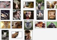 Wacky Animals Screensaver