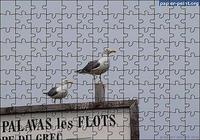 Puzzle Mouettes de Palavas