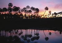 Sun Jungle Screensaver