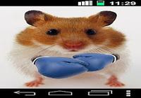 Drôle Hamster Ecran Fissuré