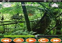Forêt Sounds