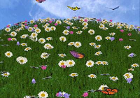 3D Camomile Field Screensaver