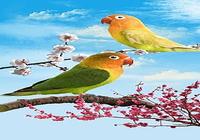 Oiseaux fond d'écran