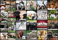 Puzzles de chiens pour enfants