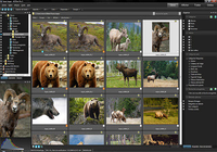 ACDSee Pro Photo Manager