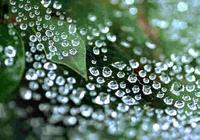 Sparkling Raindrops Screensaver
