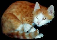 Lovely Cats screensaver