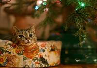 New Year Animals Screensaver