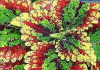 Puzzle Fleur 6