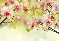 Fleurs Fond D'écran Animé