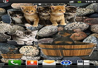 Widgets Animaux