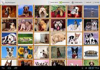 Photos de chien!