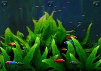 Détente Aquarium - Free
