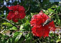 Puzzle Fleur 7