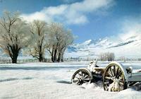 White Snow Screensaver