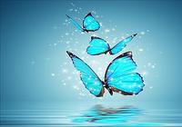 Papillon Fonds d'écran Animés
