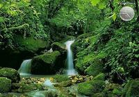 Forêt et torrents