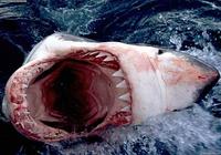 Requins Screensaver Photos