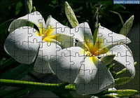 Puzzle Fleur 1