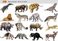 Des sons d'animaux