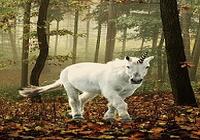 Licorne Fond D'écran Animé