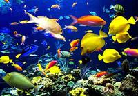 Underwater Picture Screensaver