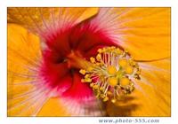 photo-555.com Album 5 Screensaver
