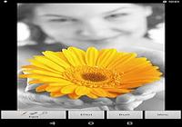 Photo Art - Color Effects