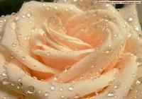 Fond d'Ecran Fleur 1024