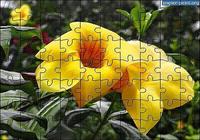 Puzzle Fleur 2