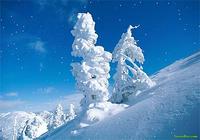 SaversPlanet Snowfall Screensaver