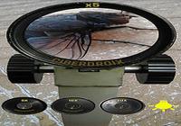 Microscope Réaliste