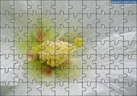 Puzzle Fleur 4