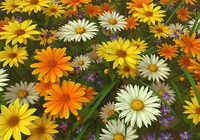 Wildflowers 3D Screensaver