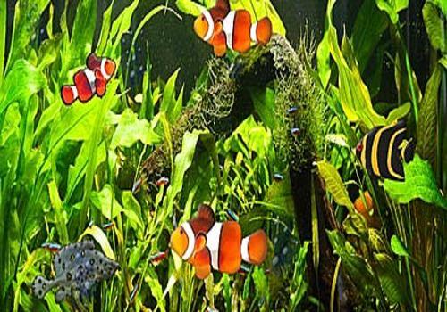 windows aquarium screensaver